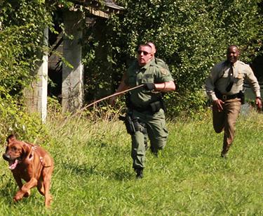 bloodhound running